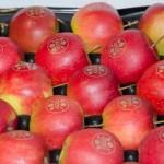 DESY Äpfel